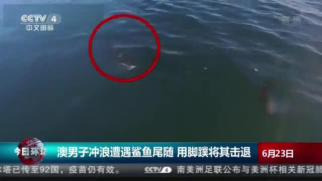 澳男子冲浪遭遇鲨鱼尾随 用脚蹼将其击退