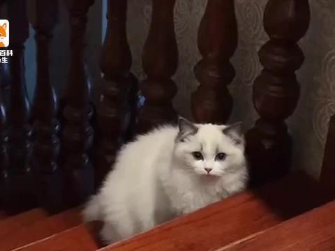 宠物养护知识!小猫怕黑吗?答案让人想不到!