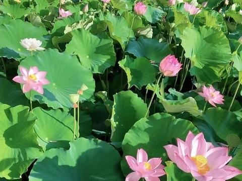 很多人赞美的世外仙境,位于云南,不加滤镜的田园风光,美如画卷