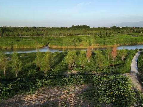 西安高新区灵沼街道,柳林庄沣河附近,航拍向日葵(续)