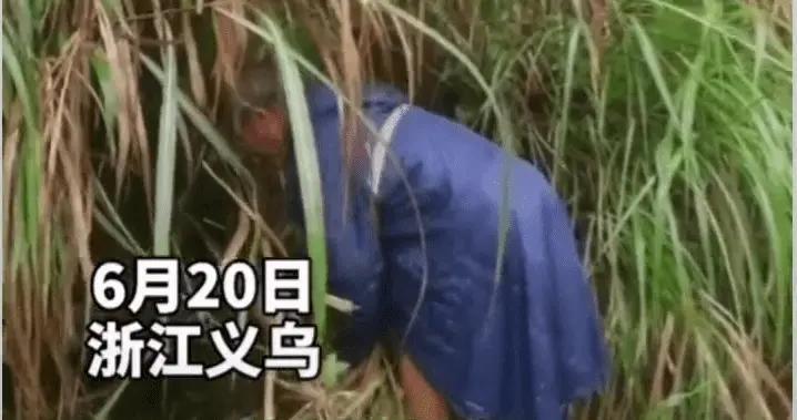 父亲冒雨割草两小时为女儿开路,网友:泪目