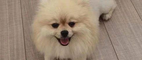 刚刚,谁见了泾阳这条狗!!紧急找狗!!