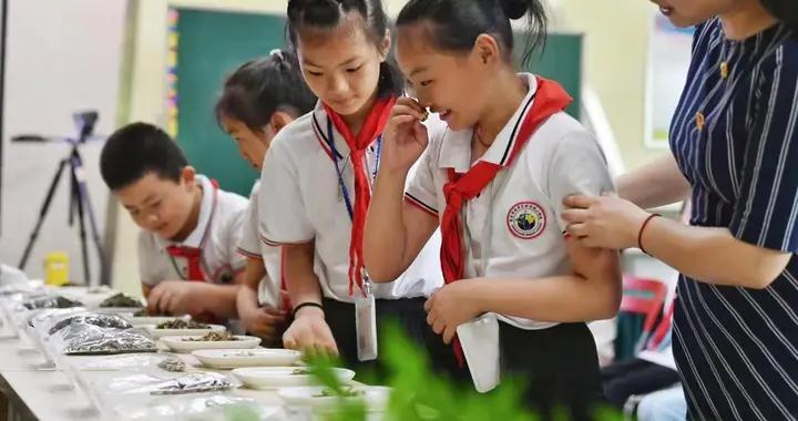 重庆开展中医药文化进校园活动 让中华传统医学在中小学生心中扎根