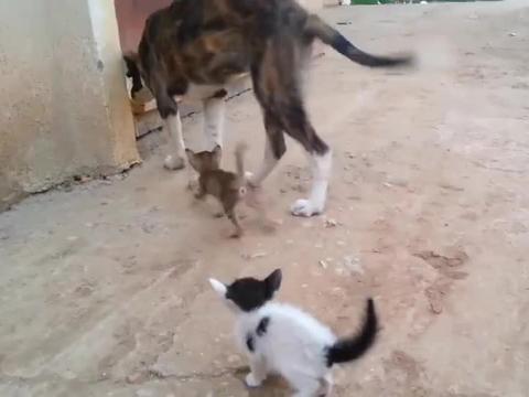流浪狗自身温饱都成问题,还去照顾流浪的小野猫,太有爱了