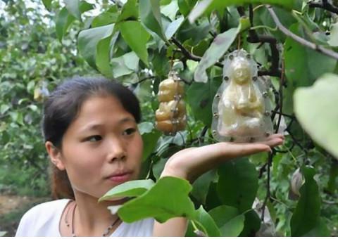 """车厘子都""""羡慕""""的4种水果,个个都""""金贵"""",但中国人吃得起"""