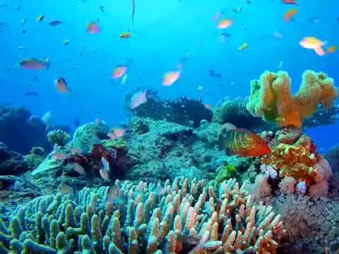 一首《我爱这蓝色的海洋》听醉了多少人影视留声机