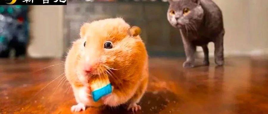 仅13天!日本科学家「人造」小鼠卵子,用干细胞纯体外培养