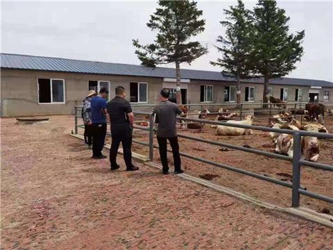 吉林省公主岭市农行支行首笔百万肉牛活体抵押贷款成功发放