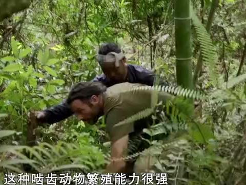 黑森中国历险记:黑森徒手挖出竹鼠,一棍直接敲晕