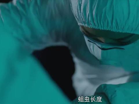 【电视剧法医秦明04】:法医通过一条蛆,就确认案发时间