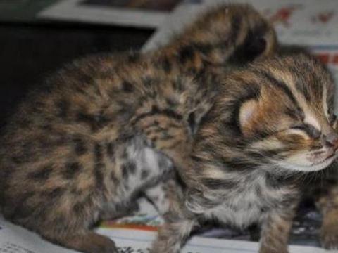 后山捡回2只可怜小猫,谁知才养几天时间,警察就找上门来了!