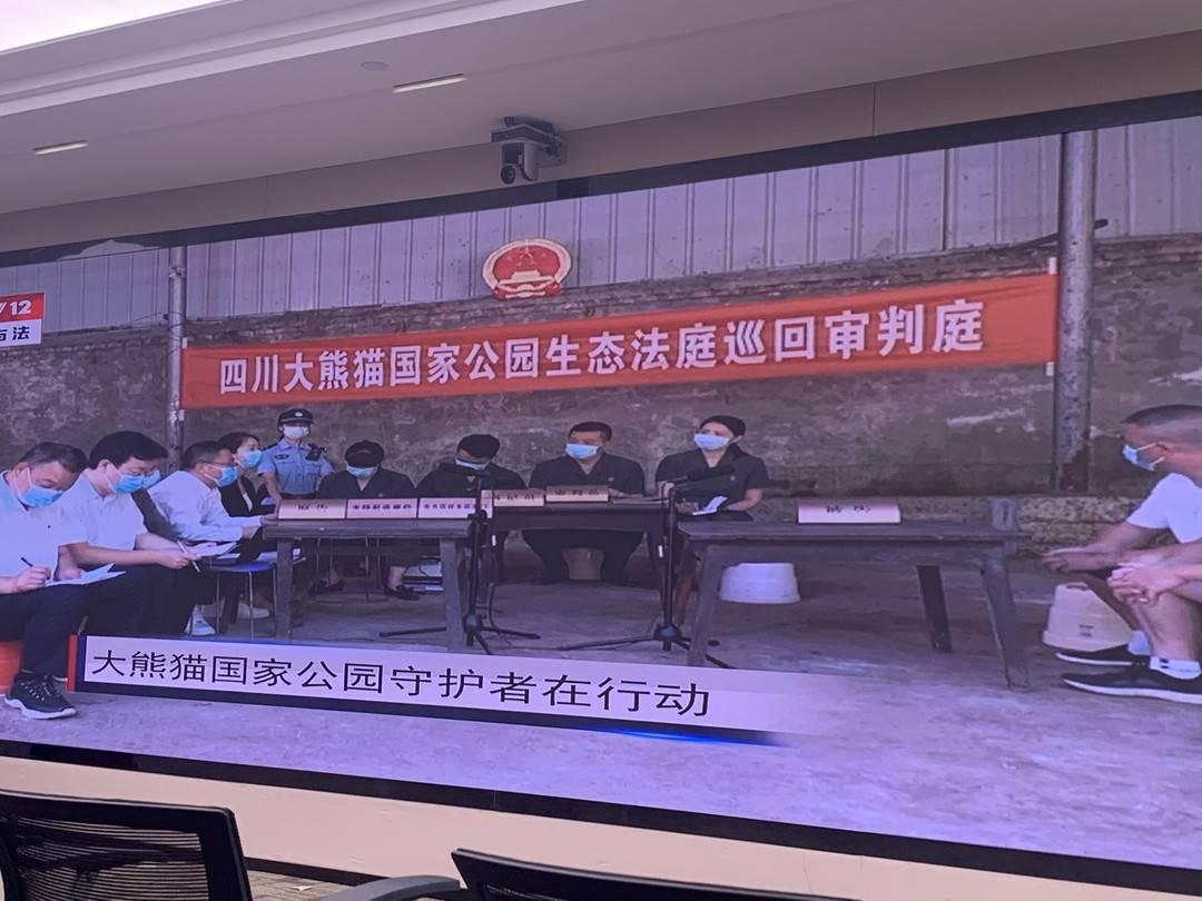 """""""中国法庭""""全媒体直播 首站聚焦四川大熊猫国家公园生态法庭第一案"""