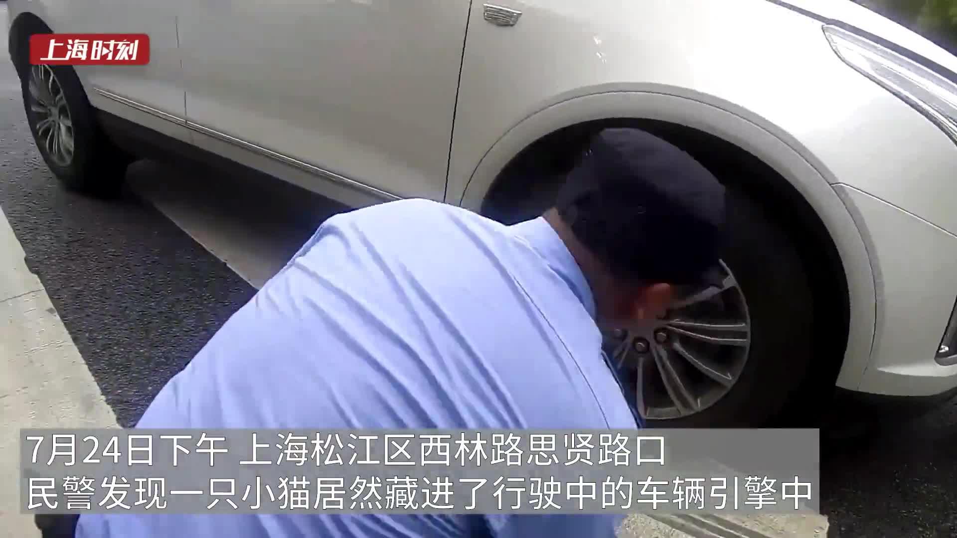 视频   台风来袭小可爱藏身引擎盖上路 上海民警路口上演救喵善举