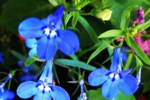 农历6月26日开始,养花养个耐看的,开出漂亮花,人见人爱
