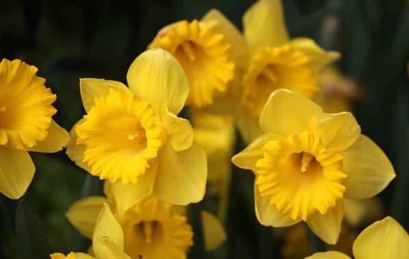 养花养个耐看的,开出漂亮花,人见人爱