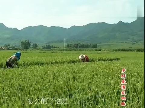 乡村爱情:赵四这次可倒霉了,贪吃羊腰子,这玩意是你能吃的嘛