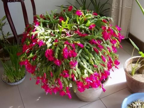 植物天热休眠,当多关注这4个问题,确保每一株都能平安度夏
