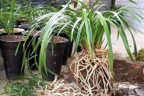 养花,不要在开花的时候,或者是在休眠的时候换盆