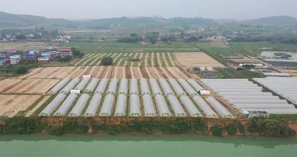冷水滩区农业农村发展硕果累累