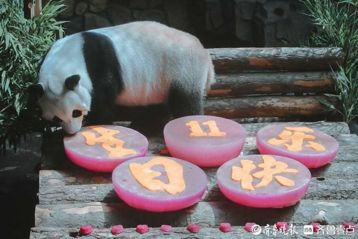 熊猫二喜奥运生日趴送出超级福利