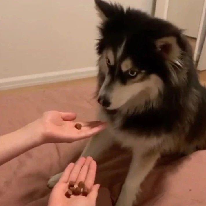 狗子挑战美食盲盒,发现真相后委屈得快哭了!