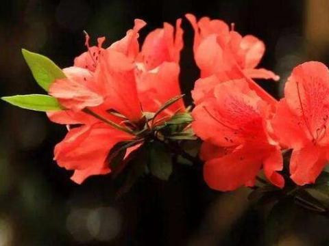 庭院选这几款花,开出漂亮花,人见人爱
