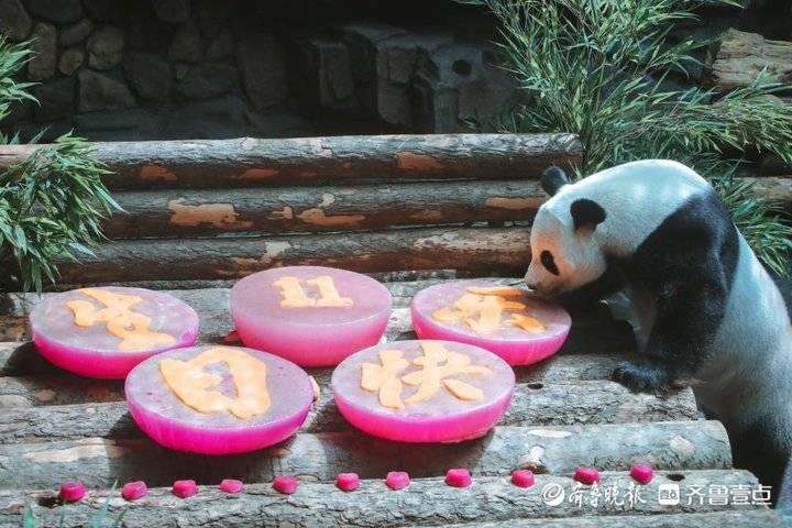 7月27日最佳情报|熊猫二喜11岁生日趴满满奥运风,恭喜获奖