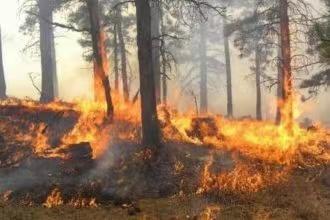 阿尔巴尼亚西南部发生山林大火