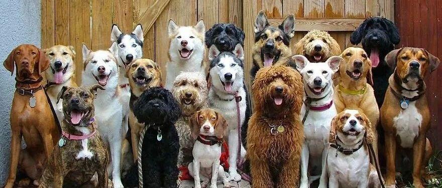 """""""我家狗子被日托所开除了,而原因居然是...""""哈哈哈哈哈笑喷了!"""