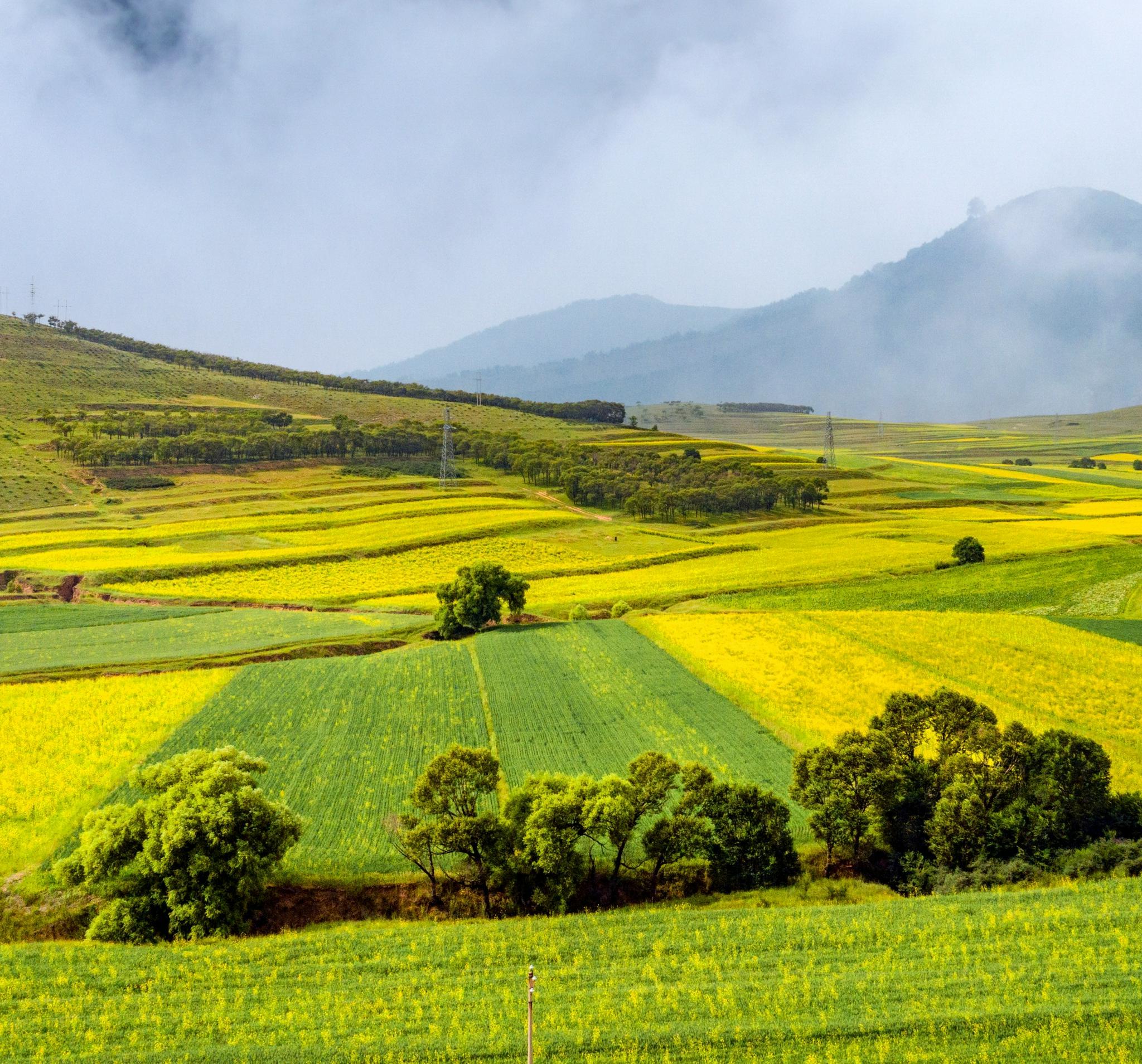 平鲁油菜花生态旅游观光季启动