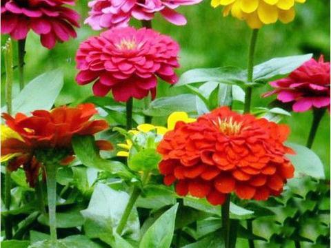 养花试试这几款,长势兴旺,着花美丽,是名实相符的开花神器