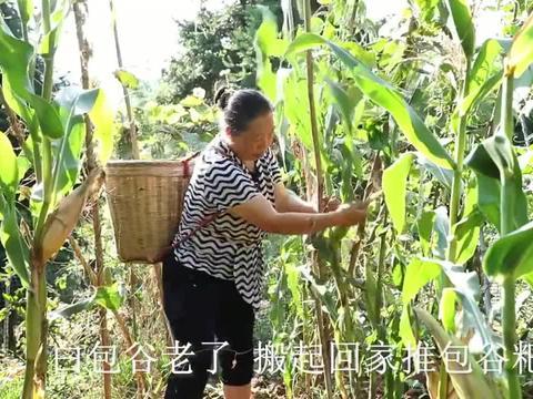 农村王四:搬了玉米,拿出蒸笼,用石磨做包谷粑下稀饭,好巴适