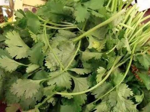 老妈的菜园子,总会留出一块地,特意种上我喜欢吃的蔬菜——盐须