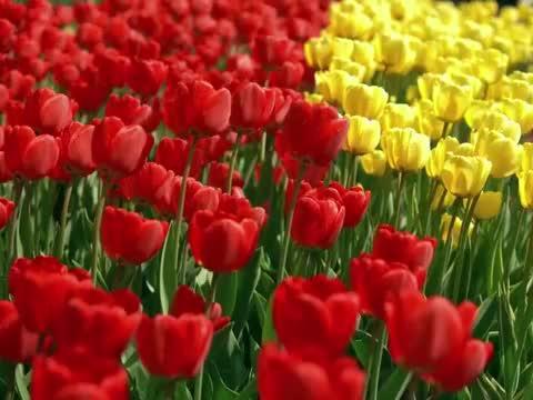 《心若莲花》《与佛结缘》《阿弥陀》虔诚祈福,佛佑阖家平安!