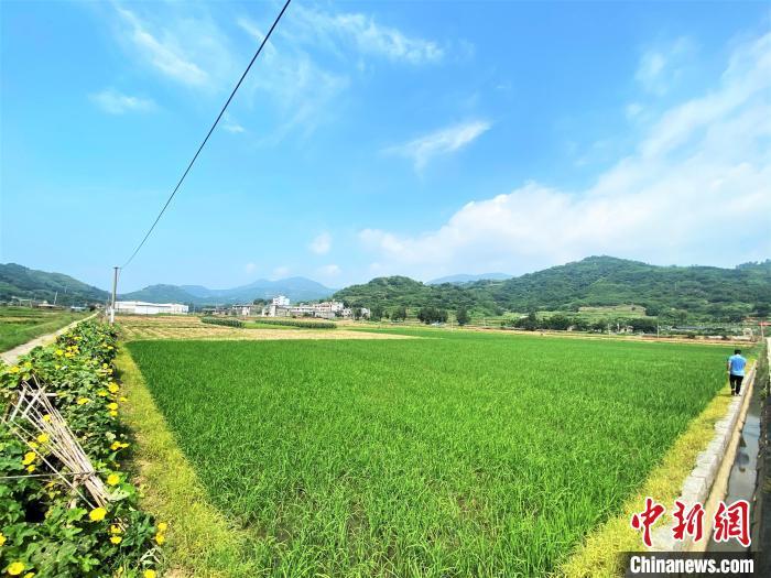 图为古县村高标准农田节水灌溉工程。 叶茂 摄