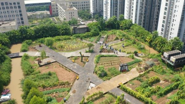 """重庆一公司在顶楼建两万平米""""开心农场"""",员工体验丰收乐趣"""