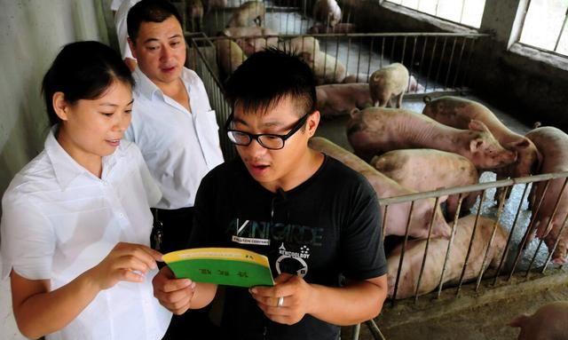 《【无极2娱乐客户端登录】我在大型猪场工作两年,现在想回家自己养殖,大家觉得怎么样?》