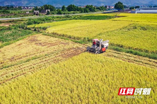 """永州:大力发展优质稻 走出粮食安全新""""稻""""路"""