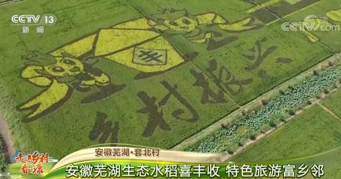 安徽芜湖·套北村:生态水稻喜丰收 特色旅游富乡邻