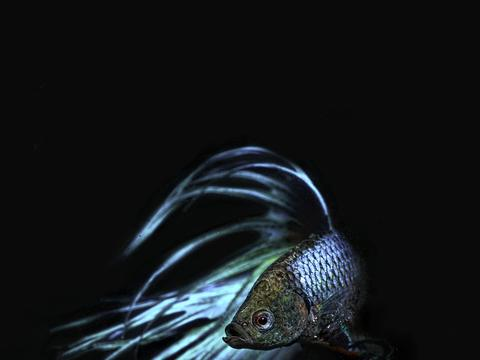 鱼缸过滤使用活性炭有什么作用?是否可以长期使用?