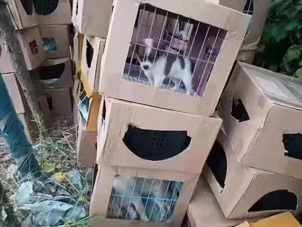 活体宠物盲盒?此地上百只奶猫奶狗哀嚎不止,有的已死亡…...