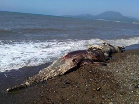 男子和伙伴在海边玩耍,发现新物种,鉴定后乐了!