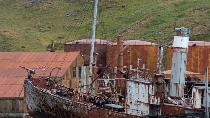 南乔治亚岛捕鲸站的海燕号捕鲸船,在一次航行中能捕获多达14头鲸鱼
