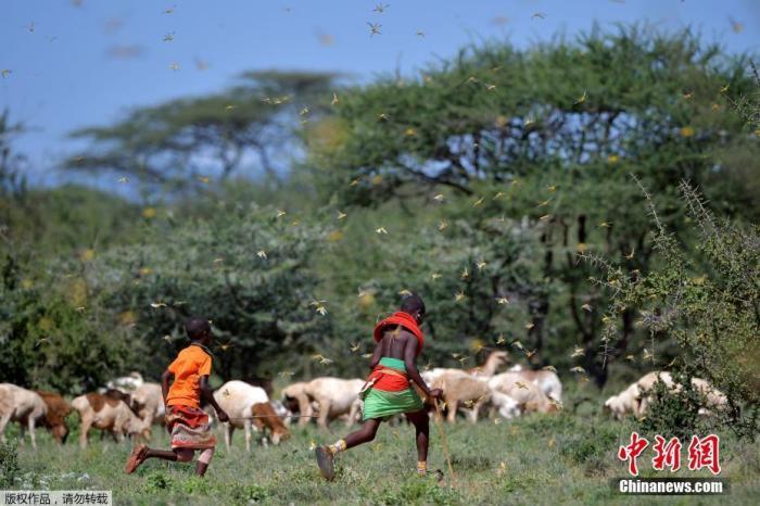 联合国:全球20亿人超重,7亿多人挨饿,三分之一粮食浪费
