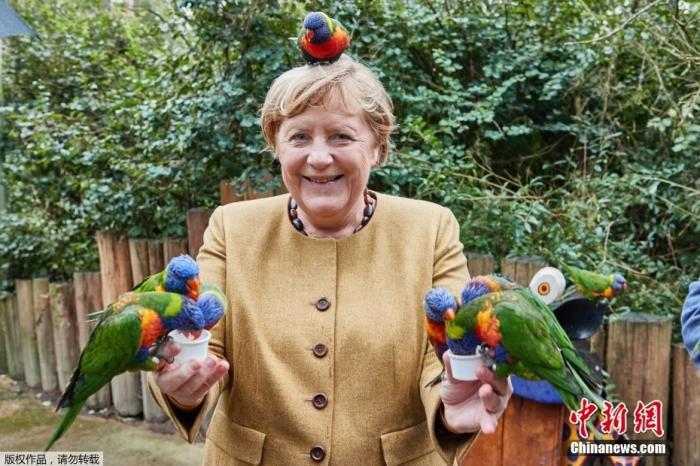 德国总理默克尔逗趣瞬间:和鹦鹉合照被啄(图)