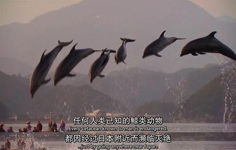 (图源:纪录片《海豚湾》)