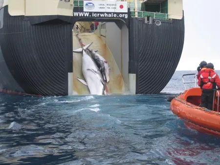 日本的捕鲸船
