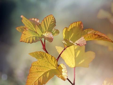 拍秋天你有思路了吗,这7个秋天摄影技巧,帮你秋天照片更美
