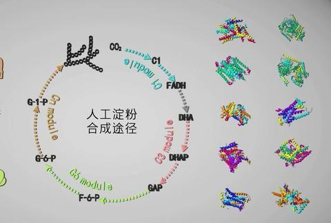 人工淀粉:中国科研的一小步,解决粮食危机的一大步
