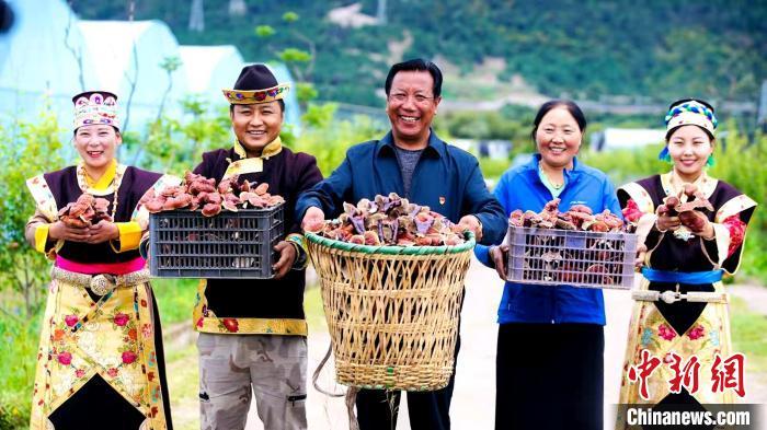 图为米林县农牧民手捧灵芝展示丰收的喜悦。 平措旺青供图